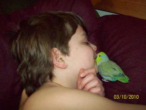 Austin and Kiwi (3 y/o Pacific Parrotlet)